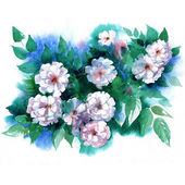 Watercolor white Briar in a classical style on a white background — Stock Photo