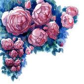 Acuarelas rosas en un estilo clásico — Foto de Stock