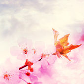 Cherry blossom with beautiful pink background. — Stock Photo