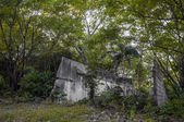 Jungle Ruins — Stock Photo