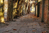 Historic Tree Lined Street — Stock Photo