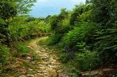 Stone Path through Wilderness — Stock Photo