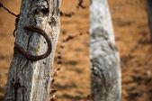Rostig hästsko — Stockfoto