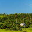 Green Hill with Palm Trees in San Andres, Colombia — Stock Photo
