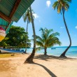 CaribbeBeach and Palm Trees — Stock Photo #18523909