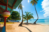 Caribbean Beach and Palm Trees — Stock Photo