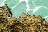 螃蟹在圣安德列斯、 哥伦比亚 — 图库照片