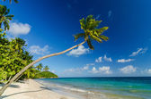 Palm Tree over Beach — Stock Photo