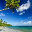 White Sand and Palm Tree — Stock Photo #18941141