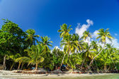 Palm Tree Coast — Stock Photo