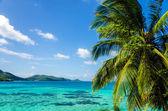 Palm Tree and Seascape — Stock Photo