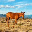 Young Horse in a Desert — Stock Photo