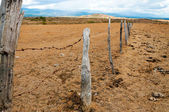 Old Fence Posts — Stock Photo