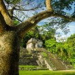 Palenque Tree and Temple - Stock Photo