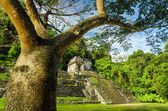 Palenque Tree and Temple — Stock Photo