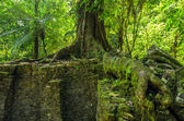 Tree Growing on Ruins — Stock Photo