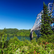 Vegetation and Bridge — Stock Photo