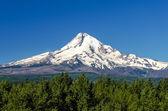 Majestic Mt. Hood — Stock Photo