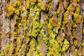树树皮纹理 — 图库照片