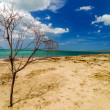 Dead Tree and Beach — Stock Photo