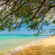 Tree and Beach — Stock Photo