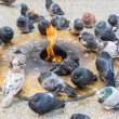 Pigeons Keeping Warm — Stock Photo #39070031