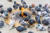 Pigeons Keeping Warm — Stock Photo