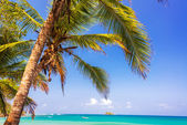 Palm Tree and Caribbean — Stock Photo