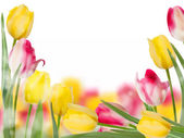 Tulips design template or background. EPS 10 — Vettoriale Stock