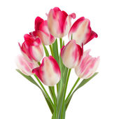 Beautiful bouquet of tulips on a white. EPS 10 — Stock Vector
