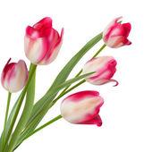 Bouquet de tulipes à trois sur un blanc. eps 10 — Vecteur