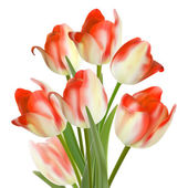 Beautiful bouquet of tulips on a white. EPS10 — Stock Vector
