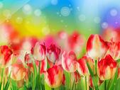 Tulipe rouge avec bokeh. Eps 10 — Vecteur