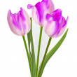 Three beautiful tulips, isolated on white. EPS 8 — Stockvectorbeeld