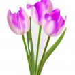Three beautiful tulips, isolated on white. EPS 8 — Stock Vector
