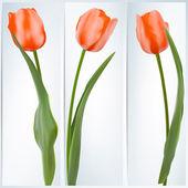 Zestaw bannerów z kolorowych kwiatów. eps 10 — Wektor stockowy