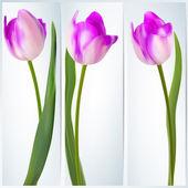 Uppsättning banners med färgstarka blomma. eps 10 — Stockvektor