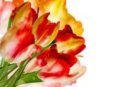Rand van rode tulpen over een wit. eps 10 — Stockvector