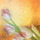 Beautiful tulips against polka dots. — Stock Vector