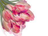 Frische frühlingsblumen-tulpe auf weiß. eps 10 — Stockvektor