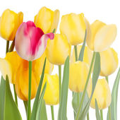 Bunch of tulips isolated on white. EPS 10 — ストックベクタ