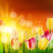 Tulpenfeld während des sonnenuntergangs. eps 10 — Stockvektor