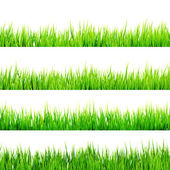 Fresh spring green grass isolated. EPS 10 — Stock Vector