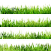 Fresh spring green grass Isolated On White. EPS 10 — Stock Vector