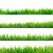 Grass isolated on white. EPS 10 — Stock Vector