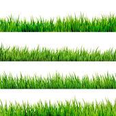 Gras geïsoleerd op wit. eps 10 — Stockvector