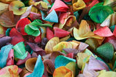 Colored wood shavings — Stock Photo