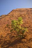 Ocher rocks (French Colorado) near Rustrel (Provence, Southern F — Foto Stock