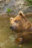 Brown bear taking a bath in the lake. — Stock Photo