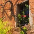 Wall of a house with a window and vines. — Stock Photo #13509414